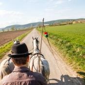 Tokaj-Spring-2015-olaszliszka-vineyard-tour