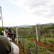 Tokaj-Spring-2015-olaszliszka-vineyard-tour2