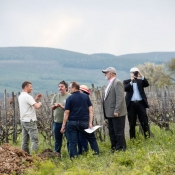 Tokaj-Spring-2015-olaszliszka-vineyard