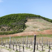 Tokaj-spring-mad-vineyard-tour