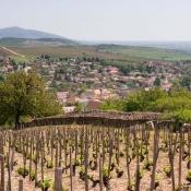 tokaji-tavasz-2016-dulotura-vineyard-tour04