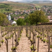 tokaji-tavasz-2016-dulotura-vineyard-tour05