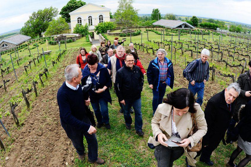 Szepsy vineyard tour - Tokaj Spring