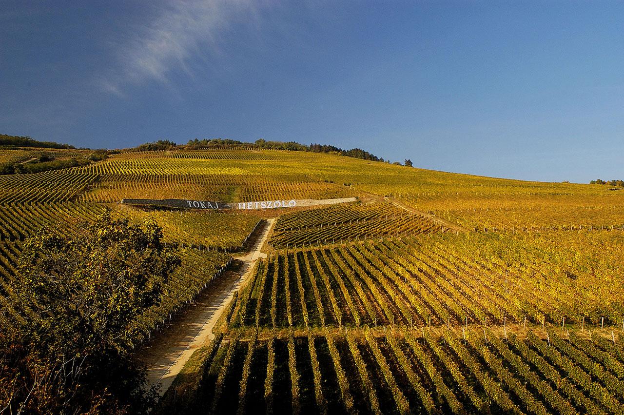 Tokaj Hétszőlő - terrace vineyard photo