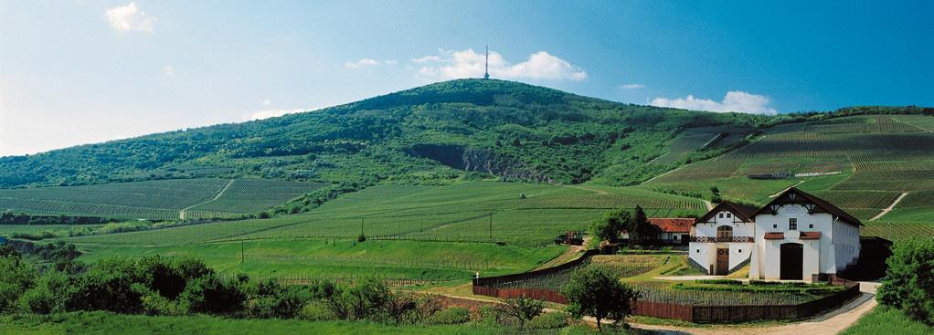 Tokaj Hétszőlő - nyári birtok - fotó