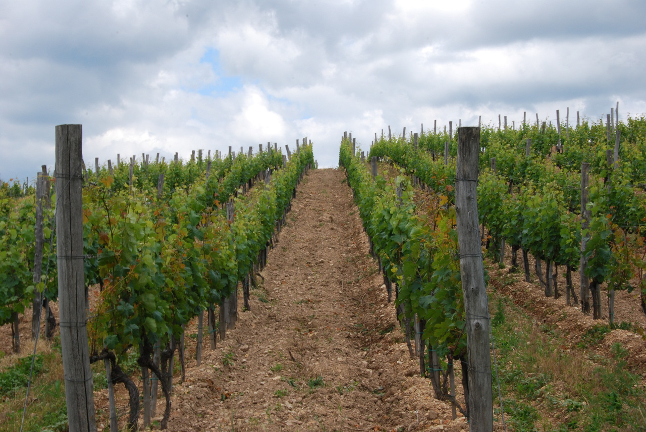 Zsirai vineyard photo