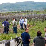 tokaji tavasz 2015 olaszliszka 2015 photo vineyard tour