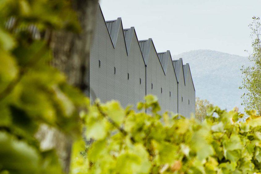 Tokaj Kereskedőház winery photo