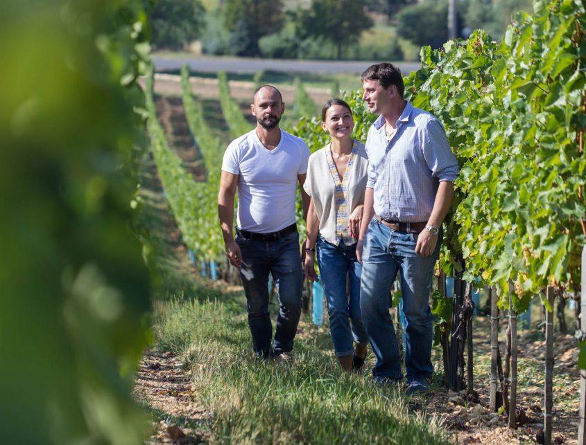 Sauska Tokaj vineyard