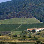 Béres vineyard photo